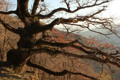 Herbstbaum-web-scaled